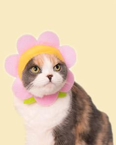 You Are Cute, Cute Love, Cat Flowers, Colorful Flowers, Cat Sunglasses, Cat Icon, Kawaii Gifts, Novelty Toys, Pink Petals