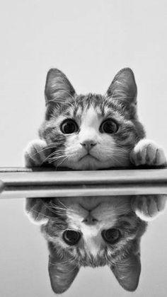 Quiero un gato