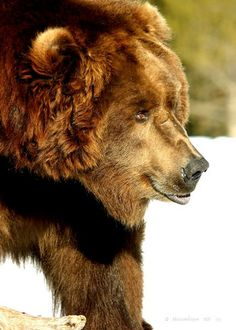 21 Best Other Happy Bears! images   Cutest animals, Happy ...