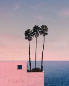 New Palm Tree Photography Ocean The Beach Ideas Tree Photography, Landscape Photography, Photography Tips, Photowall Ideas, Summer Memories, Minimalist Photography, Landscape Wallpaper, Belle Photo, Aesthetic Pictures