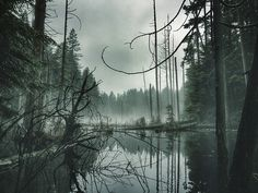 A bog with a dusting of fog. West Coast, River, Landscape, Outdoor, Outdoors, Rivers, Outdoor Games, Landscaping
