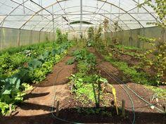 Camdeboo Farm - 45min from PTA - 25min from JHB {open Friday - Sunday}