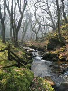 THis is Moor Brook, in Dartmoor, Devon. Blackdown is in Devon, but it isn't in Dartmoor . but I love Dartmoor, so here's a picture of it. Beautiful World, Beautiful Places, Beautiful Forest, Peaceful Places, Landscape Photography, Nature Photography, Photography Tips, Portrait Photography, Wedding Photography