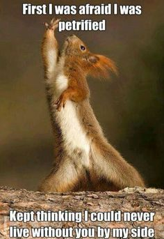 ...or maybe a disco squirrel? ;-)