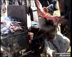 "Fur farming in China, skinning them alive. If you wear fur, even ""fake"" fur, this is what you are supporting..."