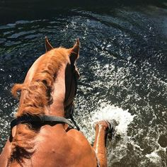 Horse splashing in the water. Who needs a water treadmill when you have nature ☀️ PC: Somerford Park Farm Pretty Horses, Horse Love, Horse Girl, Beautiful Horses, Animals And Pets, Cute Animals, Hunter Jumper, Types Of Horses, Horse Quotes