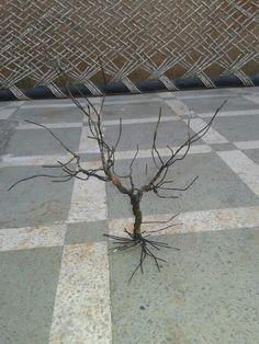 Matel wire tree black