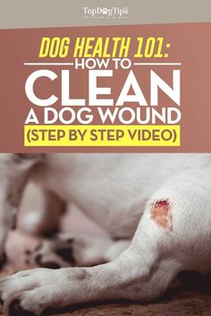 How To Clean A Dog Wound: A Step-By-Step Instructional Video Guide - Top Dog Tips