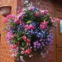 Attain an excellent floral display from your hanging baskets with our Hanging Basket Mix. Plant up with our mix of varieties, some with Award of Garden Merit and achieve a hanging basket with a spread and tumbling generously with flowers. Fall Containers, Succulents In Containers, Flower Containers, Container Herb Garden, Container Gardening Vegetables, Garden Planters, Diy Hanging Planter, Hanging Flower Baskets, Ivy Geraniums