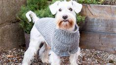 Sticka ett fint hundtäcke i reflexgarn Stick O, Textiles, Baby Knitting Patterns, Knitting Projects, Pet Birds, Animals And Pets, Crochet, Fabric, Crafts