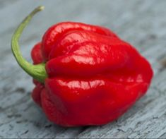 Carolina Reaper or chili pepper is the world's hottest pepper. Taking part in a hot chilli pepper eating contest might have some. Worlds Hottest Pepper, Hottest Chili Pepper, Canning Hot Peppers, Pepper Benefits, Stuffed Mini Peppers, Yellow Fruit, Pepper Seeds, Spicy Recipes, Scotch