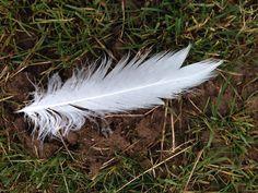 Kennst du den Vogel von dem diese Feder stammt? #vogel #bird #feder #feather #see #wildnis #naturbegegnungen #nature