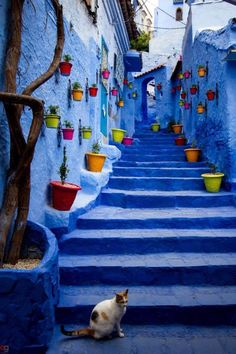 Blue street & colorful flower pots in Chefchaouen, northwest Morocco ✯ ωнιмѕу ѕαη∂у Beautiful World, Beautiful Places, Marla Singer, Moroccan Blue, Blue City, Blue Aesthetic, Belle Photo, My Favorite Color, Background Images