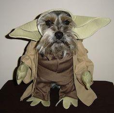 Dog in Yoda Halloween Costume
