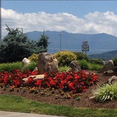 What a beautiful day in the Smokies! #pigeonforge #smokymountains #vacation