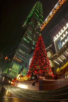 https://flic.kr/p/dyGVFv   Taipei 101 & tree.