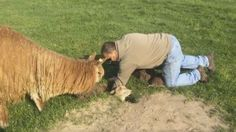 Adorable video shows farmer using shovel to dig baby alpaca from badger hole.