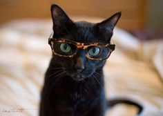 Photographic Print  Cat in Glasses 2  5x7 by instantt on Etsy, $17.00