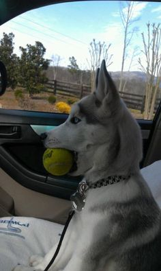 Got my tennis ball. Dog park, here we come!