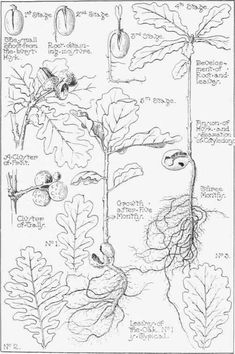 Love this idea for nature journal: hand-drawn leaf/tree identification.