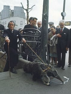 4) Salvador Dalí tenía un oso hormiguero como mascota y de vez en cuando lo sacaba a pasear. OLE QUE OLEEEÉ!