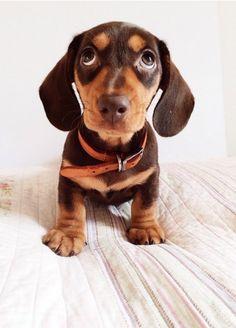   Cutest Paw