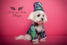 Anthony Rubio Designs.  . www.AnthonyRubioDesigns.com  . Photo by Yoni Levy  . Model: Jagger (A Maltese) .