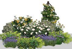Вариант цветника для сада природного типа  1.Роза Graham Thomas — 1 шт. 2.Роза Crocus Rose — 2 шт. 3.Роза The Pilgrim — 1 шт. 4.Манжетка мягкая — 3 шт. 5.Эхинацея пурпурная — 2 шт. 6.Пиретрум — 2 шт. 7.Лаванда — 3 шт. 8.Лук скорода — не менее 10 шт.