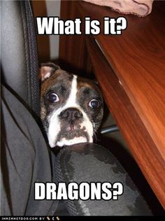 """Those Boxers are such great """"watch dogs"""". haha  This looks just like my   granddaughter, Tyka"""