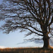 Valokuvatapetti - Alone Tree