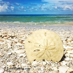 vintage upcycled reclaimed beach jewelry beachbum ocean Sand Dollar Cowrie Seashell /& white leather Necklace vacation sea festival wear