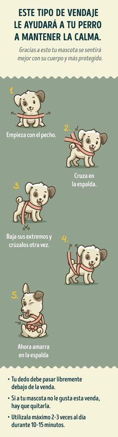 Compártelo con todos aquellos que tengan perros