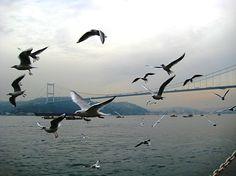 İstanbul'dan günaydın…  İstanbul'da bugün 16°/12° derece yağmurlu bir hava hakim olacak. Şehirde iyi bir gün geçirmeniz dileğiyle…  ... Goodmorning from Istanbul…  Today Istanbul will be 16°/12° rainy. Hope you'll have a nice day in the city…