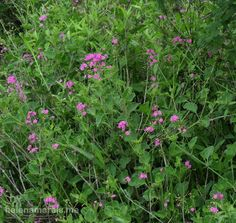 Flowers Herbs, Flowers, Plants, Photography, Animals, Photograph, Animales, Animaux, Florals