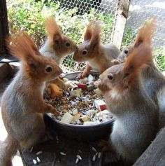 Lunch around the food bowl.