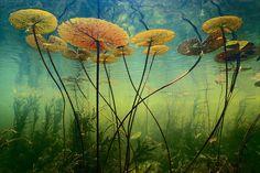 by Frank Lanting - Botswana Okavango delta