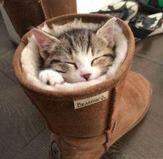 Snuggly kitten in boot. Super cute :)