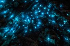 Glowworms Cave