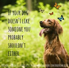Haha but my dogs love everyone! I guess that should make me doubly suspicious if there ever is someone they don't like...  Dog quote via www.Facebook.com/AndNowLaugh