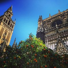 Channelling Fernando Gonçalves today with a stunning photo of Seville and one of his scents, bitter orange (aka Seville Orange) ⛪️