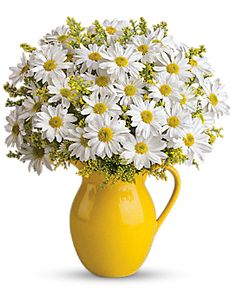 Teleflora's Sunny Day Pitcher of Daisies Container Arrangement