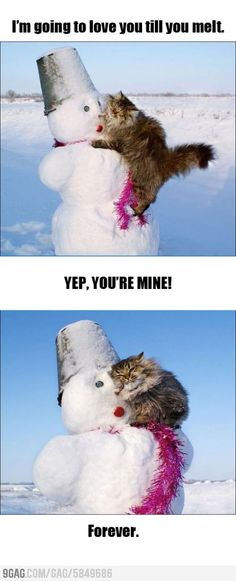 Overly Attached Cat... this is precious...