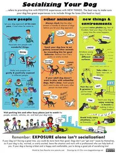 Good dog info