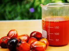 Commodity Market Tips And Equity Trading Tips: Commodity Tips:- Crude Palm Oil (CPO) Trading Rang. Testosterone Boosting Foods, Low Testosterone Symptoms, Boost Testosterone, Palm Fruit Oil, Red Palm Oil, Increase Testosterone Naturally, Edible Oil, Natural Health Remedies, Healthy Life