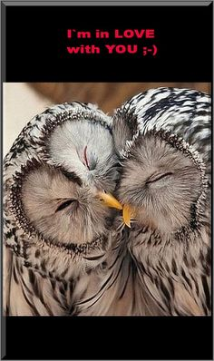 OWLETS IN LOVE  💜💜💜   #by MyOwlBarn #owl owls animals wildlife