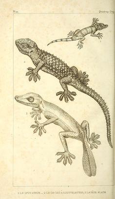 t. 2 - Oeuvres du comte de Lacépède : - Biodiversity Heritage Library