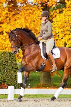 53 Best Dressage images in 2015 | Horses, Dressage, Beautiful horses