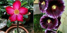 6 plantas preciosas que, además, crecen a pleno sol sin ningún problema