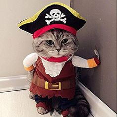 Arrrgh Me Matey ~ Pirate Pet Halloween Costume ...My Kitty Looks So cute In His.