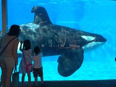 Urge SeaWorld to Send Orcas to Sea Sanctuaries and Stop the Use of All Animals!